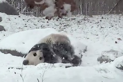 screenshot via Youtube/Toronto Zoo