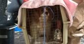 Ebola, in quarantena anche il cane dell'infermiera risultata positiva