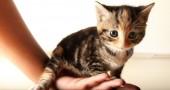 come tenere un gatto in casa