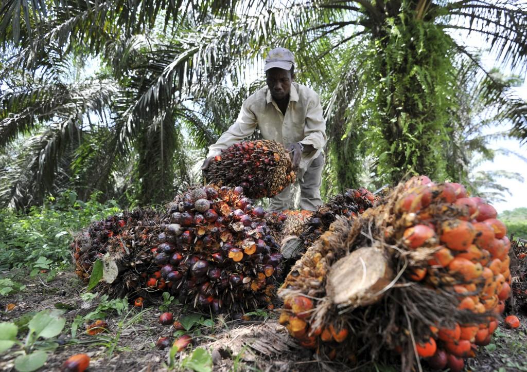 olio di palma fa male