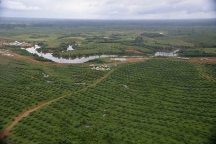 L'olio di palma, il grasso che fa discutere il web. E non solo