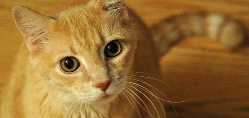 gatto con il gps