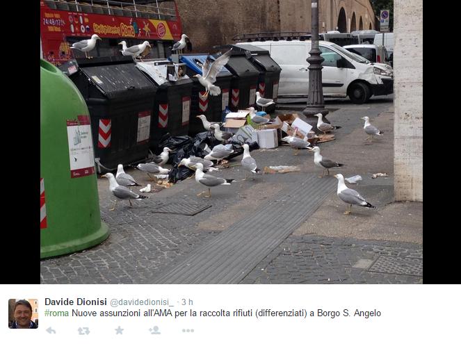 emergenza rifiuti roma gabbiani