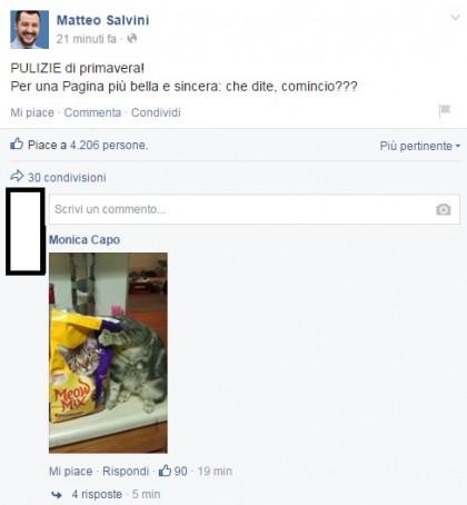 Matteo Salvini gattini