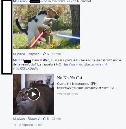 gattini su salvini mici