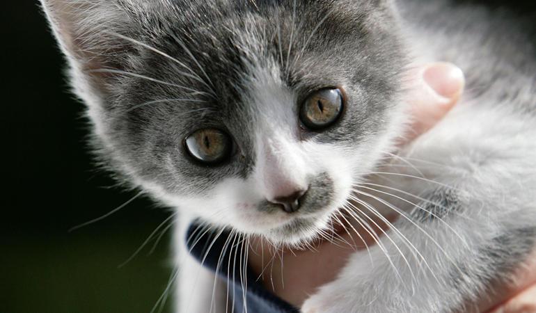 veterinaria gatto malato
