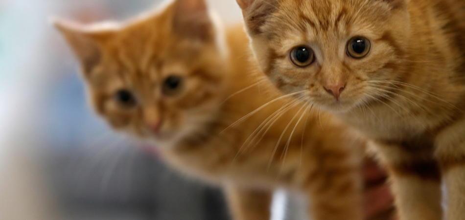 video di gattini