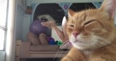 yoga gatto video