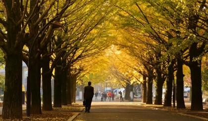 primo giorno autunno