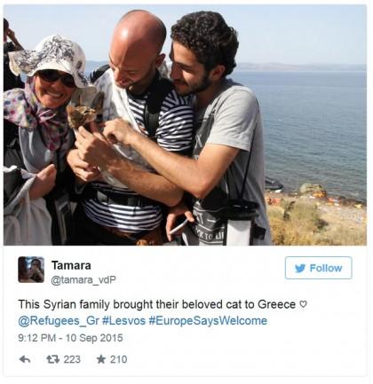 foto migranti siria gattino