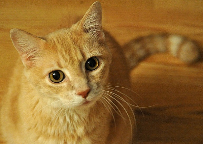 Come risparmiare con le detrazioni fiscali per cane e gatto