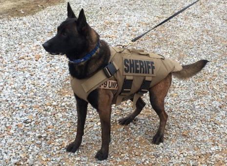 La città che protegge i cani poliziotto con i giubbotti antiproiettile – Giornalettismo