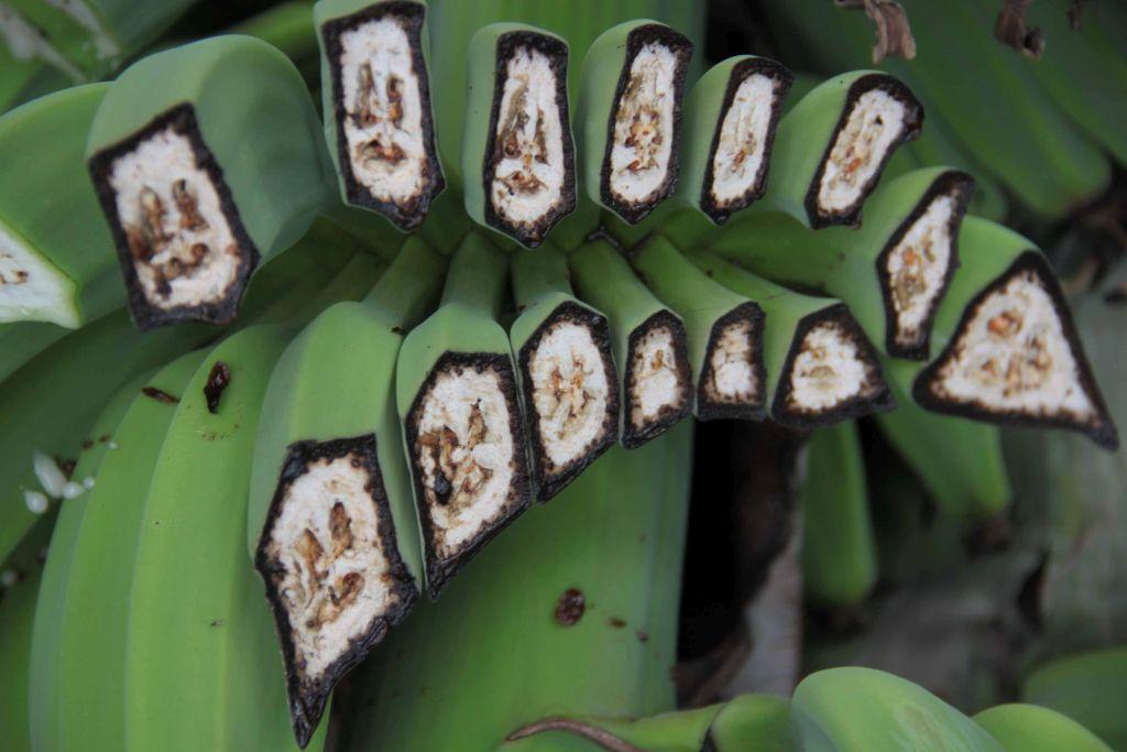 Gli effetti del fungo sulle piante