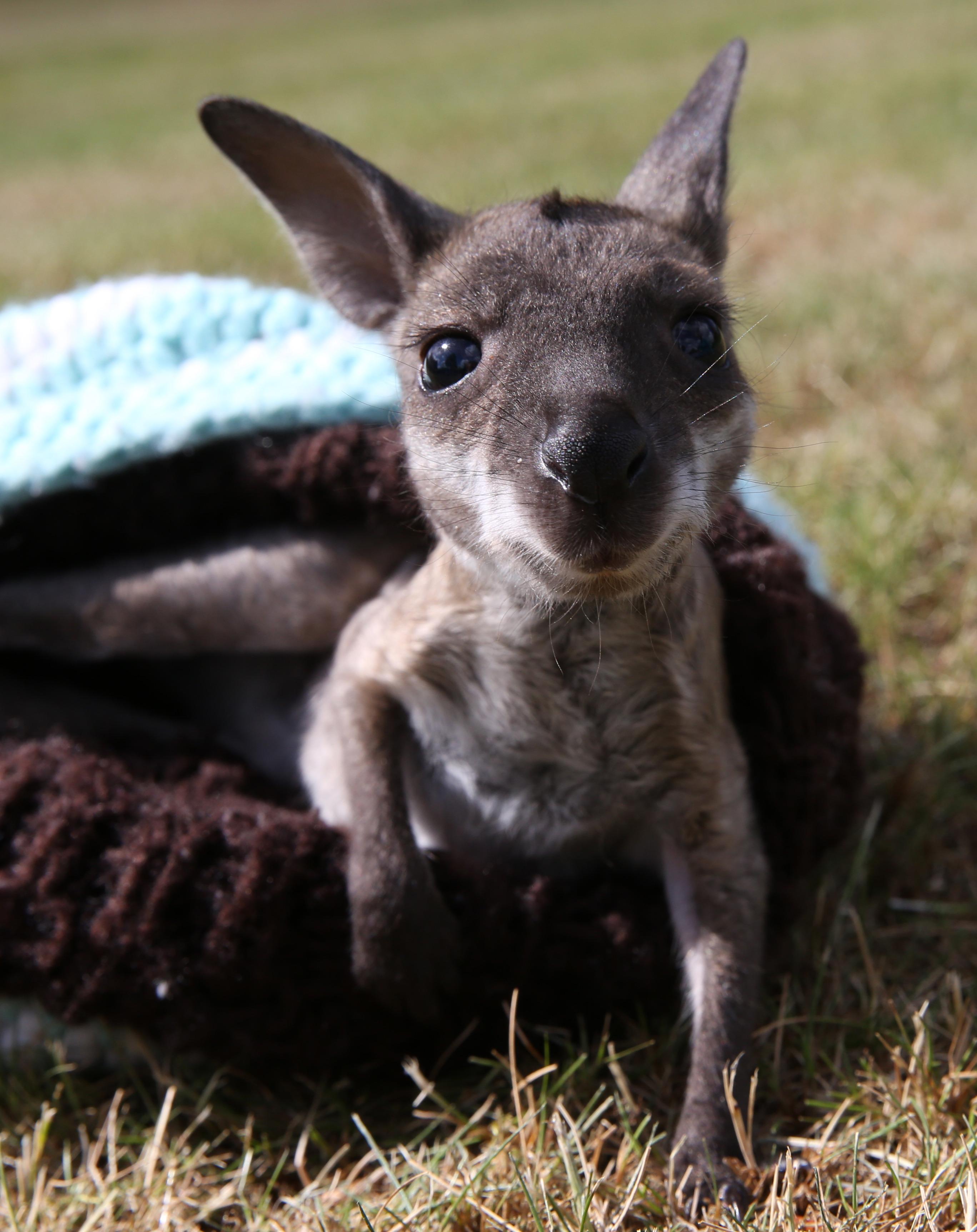 Non Tutti Gli Animali D Australia Proveranno Ad Ucciderti