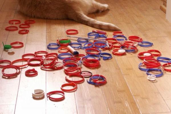 gatto collezione