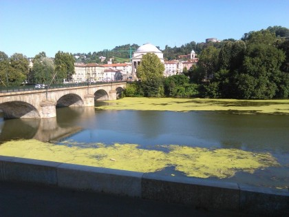 chiara appendino alghe