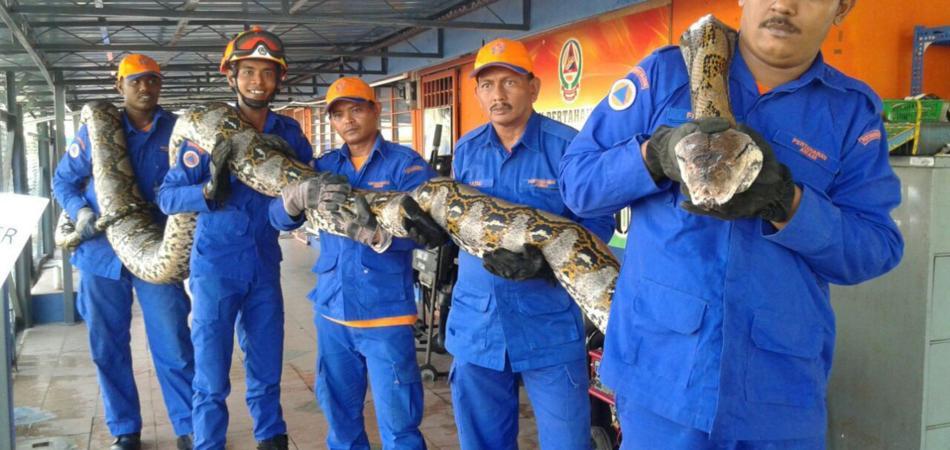 serpente più lungo del mondo