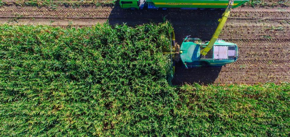 cos'è l'agricoltura biodinamica