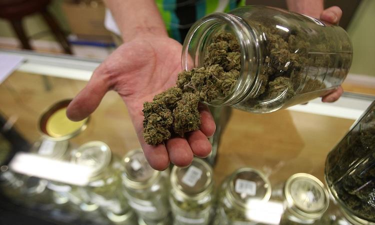 cannabis terapeutica farmacie