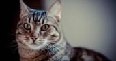 Come è nata la Festa del Gatto e perché ricorre il 17 febbraio