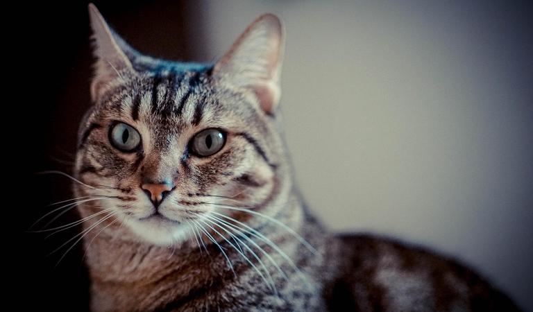 passaporto cane gatto