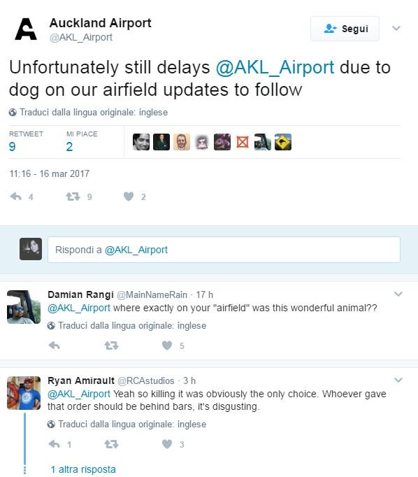 Cucciolo fugge e scatena il caos in aeroporto: ucciso