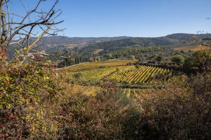 Cosa-vedere-in-Toscana-il-Chianti-classico