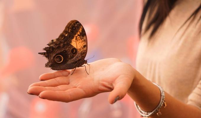 farfalle orto botanico napoli