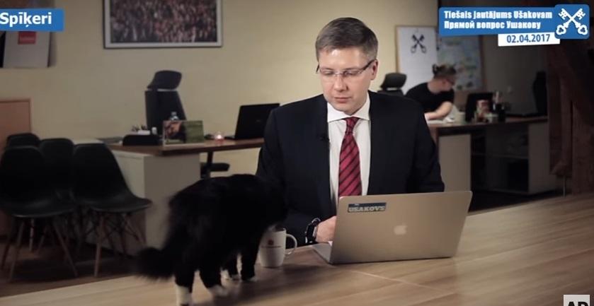 gatto sindaco riga