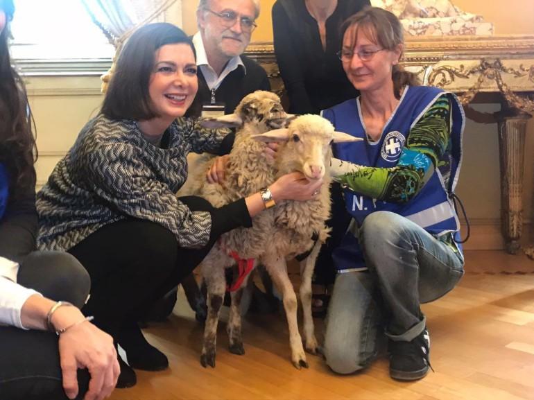 Gaia e Gioia, due agnelline a Montecitorio