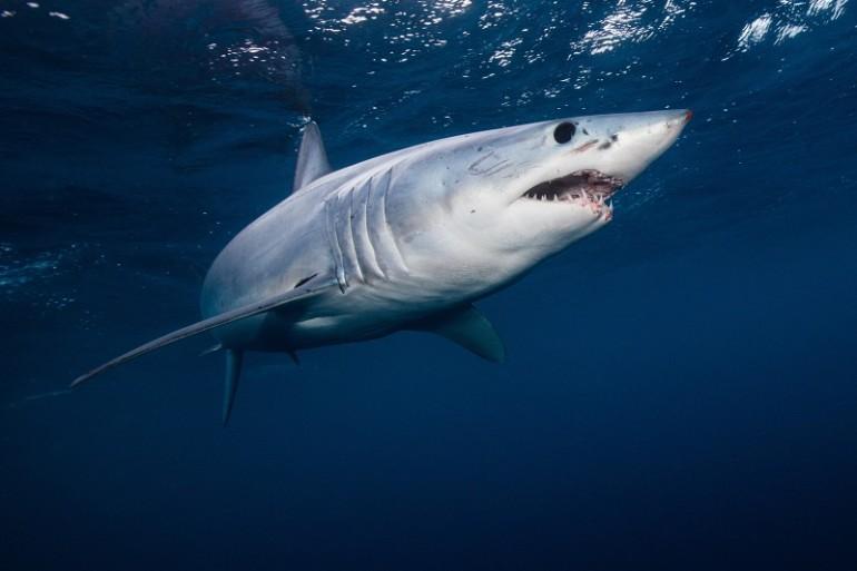 Surfista di 17 anni uccisa da uno squalo