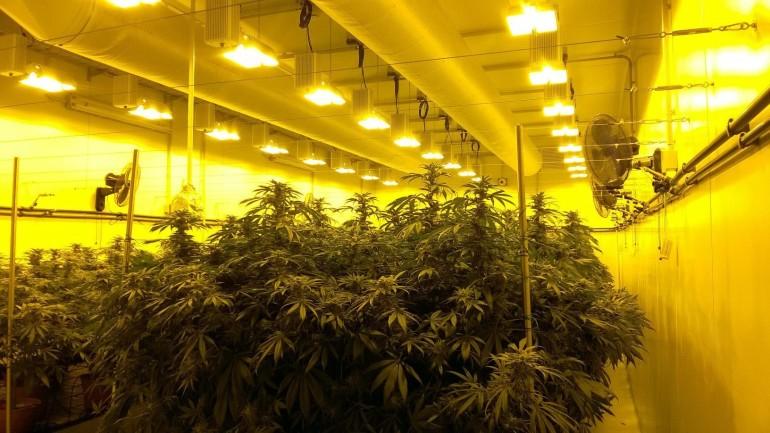 In commercio in Italia la marijuana 'light'
