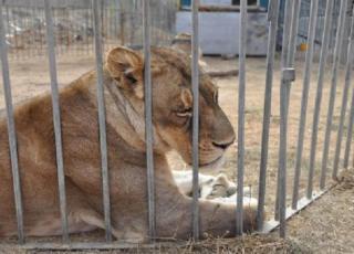 legge animali circo