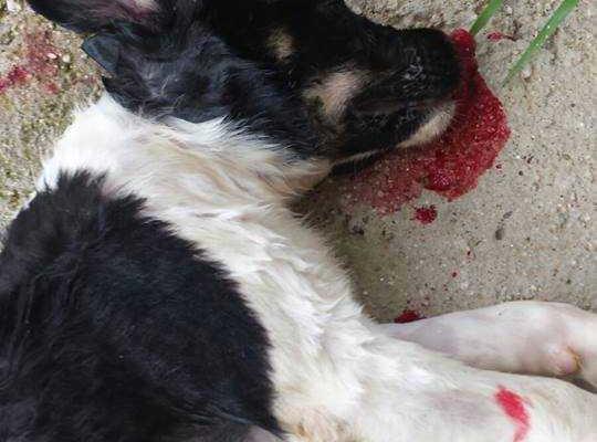 cucciolo massacrato a Soverato