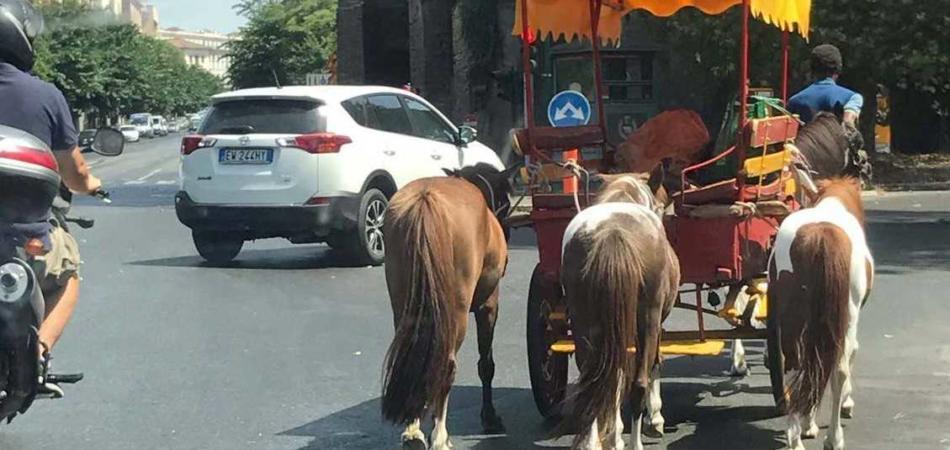 pony roma