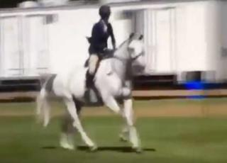 ereditiera picchia cavallo