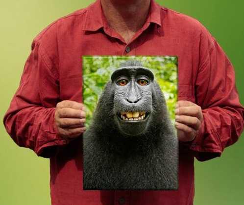 selfie scimmia