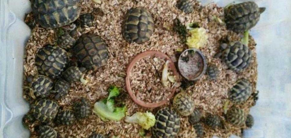 tartarughe firenze