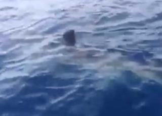Rimini squalo