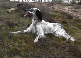 cane sepolto vivo