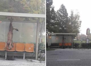 lupo ucciso e appeso alla fermata dell'autobus