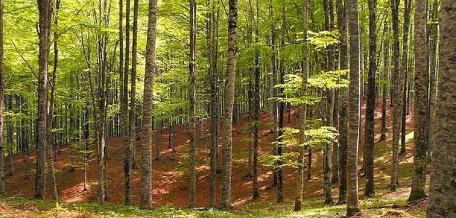 padova alberi