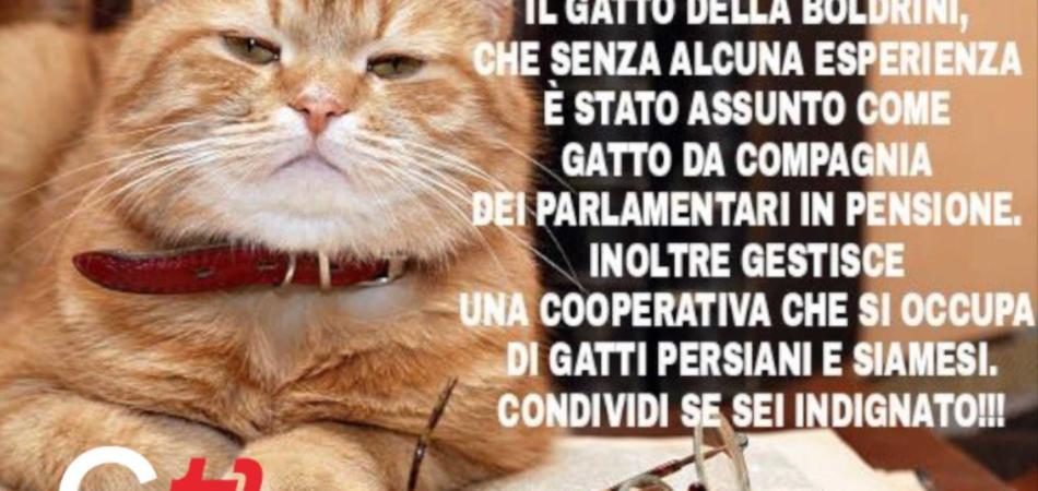 I gattini di #ZiaLaura